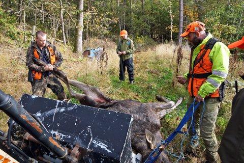 Vestby nordre jaktlag fra fjorårets elgjakt.