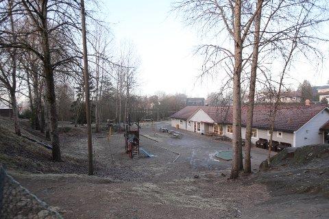 MÅTTE TA FLERE: I mars veltet et seljetre ned i Deør barnehage mens barna var ute. I etterkant har en arborist sett på de resterende trærne og 9-10 trær ble fjernet.