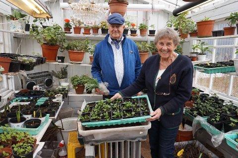 TRIVES: Leder Charles Jeffrey og styremedlem Gretha Nermo i Vestby hagelag trives godt med hagearbeid. Her i Nermos drivhus.