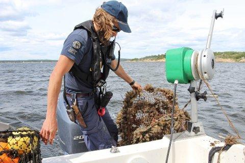 77 ANMELDT: Hele 77 personer er anmeldt for ulovlig fiske i Ytre Oslofjord.