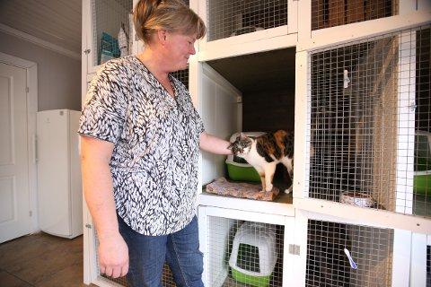 Karin Brevik har seks katter på pensjonatet for øyeblikket. Her er det Nitro som får litt kos.