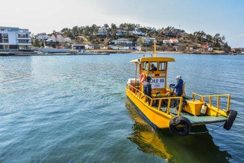 MYE BRUKT: Den lille, gule ferja over Husøysund benyttes av mange.
