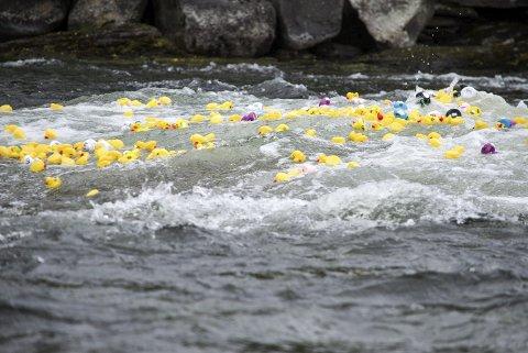 ANDESLIPPET: Rett etter andeslippet med godt over 500 ender seiler de av gårde i starten av Norges lengste elv Glåma fra Glåmos. Alle foto: Ole Annar Krogh