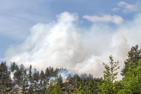 SKOGBRANN: Skogbrannen startet på en Kolle innerst ved Tobonn.