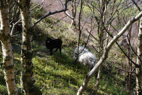 MER FRED: Verneområdeforvalter Maria‐Victoria Solstrand for Flekkefjord landskapsvernområde vil at beitedyra i Brufjell skal få mer fred og vil stenge av en sti.