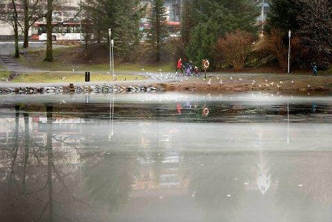 Allerede i 1998 ble det nedlagte avfallsdeponiet på Slettebakken pekt ut som synderen bak forurensingen i Tveitevannet. Nå skal kommunen tvinges til å rydde opp. Arkvifoto: Skjalg Ekeland