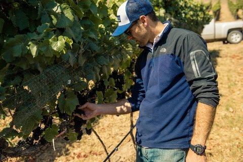 Pinot Noir trives best hjemme i Bourgogne. Men også under andre himmelstrøk kan de få til gode, og ofte langt rimeligere viner, av denne druen. Her sjekker Justin Willett hos Tyler i Santa Barbara i USA den lunefulle druen.