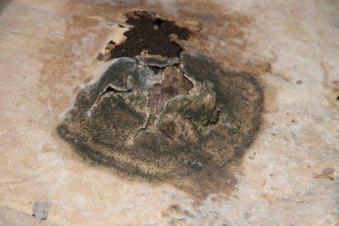 Rapporten slår fast at muggsoppen har spredd seg fra krypkjelleren til et ansattrom i underetasjen på skolen.