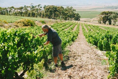 Adi Badenhorst lager vin i Sør-Afrika og er en av de sentrale i det som kalles «The Swartland Revolution».