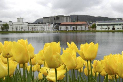 Det er meldt ganske grått vær i Bergen de neste dagene.
