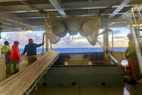 Liegruppens fiskere på makrellfiske i januar 2019.