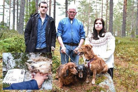 MISTET ÉN: Alma (innfelt) ble drept av ulv, mener Velte E. Velstad, Svein Velstad og Inger Maria E. Vego.