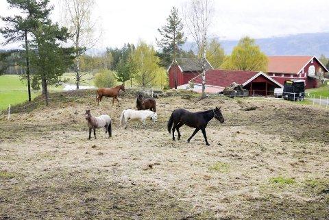 TRIVELIG MED DYR: Hestegård på Kolkinn.