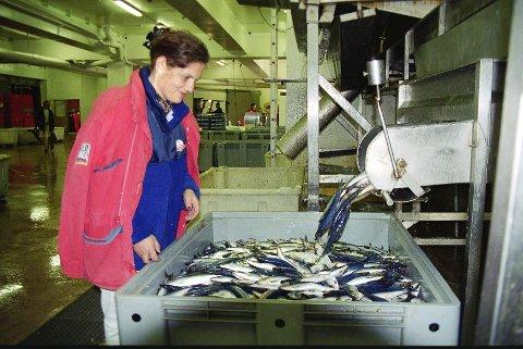 HOLDER ØYE MED FISKEN: Siri Meling har selv jobbet på Fonn Egersund, der dette arkivbildet er tatt. Nå er hun regiondirektør i Fiskeridirektoratet.