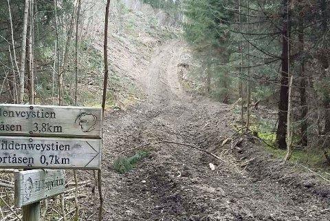 IKKE MYE IGJEN: Turstien til Grytjern er helt utslettet av skogsmaskiner - etter en omfattende skogsdrift rundt juletider. FOTO: PRIVAT