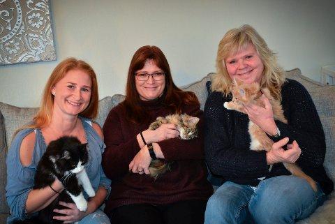 KATTEHJELPEN DRAMMEN OG OMEGN: De brenner for dyrevelferd og har hittil i år omplassert over 120 katter.