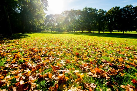 I morgen kan det bli mye sol og ganske høye temperaturen for årstiden.