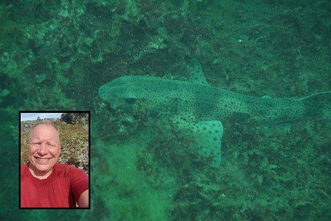 TITT-HAI: Denne småflekkede rødhaien ble foreviget av Tom E. Nøkleby (innfelt) da han dykket på Storsand i slutten av august.