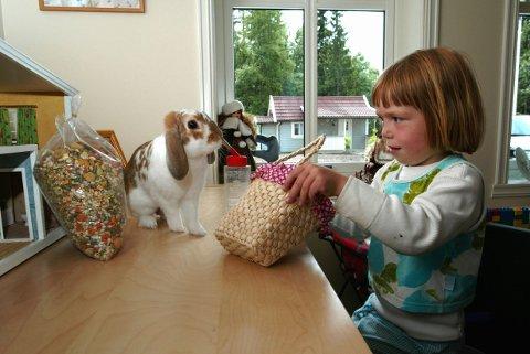 KREVENDE: Mattilsynet ber deg tenke deg om to ganger før du skaffer en kanin i julegave til barnet ditt. Illustrasjonsfoto: Bjørn Sigurdsøn/scanpix