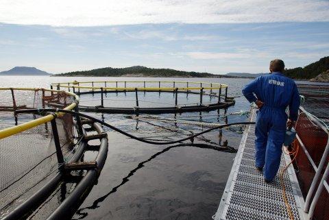 OPDRETT: Frå Nærøysund Matfisk AS sit fiskeoppdrettsanlegg utanfor Florø. Illustrasjonsfoto.