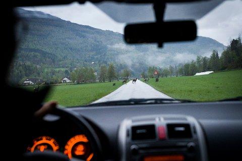 MØRKETAL: Mange dyr vert påkøyrd i trafikken utan at det vert meldt i frå. Arne Voll trur mange er redde for å bli stilt økonomisk ansvarleg for dyret.