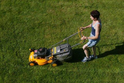 NEI: Grasklipping bør du utsette til pinsa er ferdig.