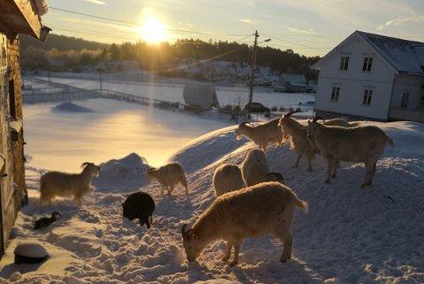 Vinterlig idyll på gården som gir «opphold utenfor produksjonslinja» for dyr som har vært utsatt for vanskjøtsel eller som eieren har mistet interessen for.