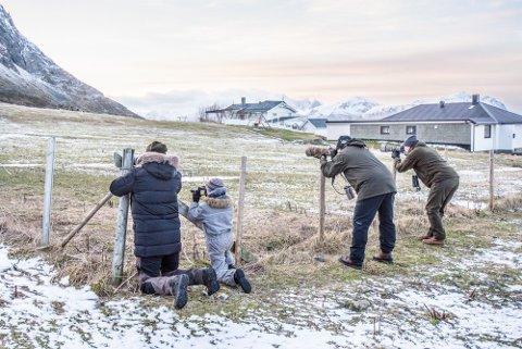 FOTOGRAFER I ACTION: Særlig to forskjellige positurer var populære når fuglekikkerne på Vikten fotograferte svartflekktrosten.