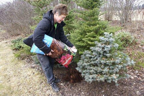 Etterfyll med jord i blomsterbedene dine og gjerne fyll på med dekkbark rundt buskeområder.