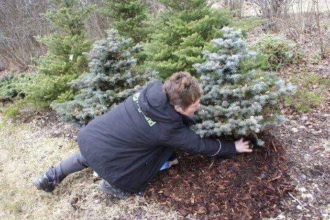 Spre dekkbark ut rundt buskene dine, så ser det flottere ut på en-to-tre.