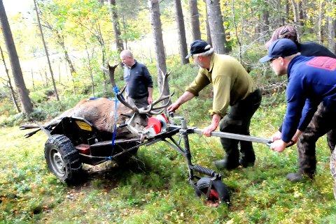 SKRANTESJUKE PÅ HJORT: Første hjorten med skrantesjuke i Norge ble felt i grensetraktene mot Lesja der dette jaktlaget har elg- og hjortjakt.