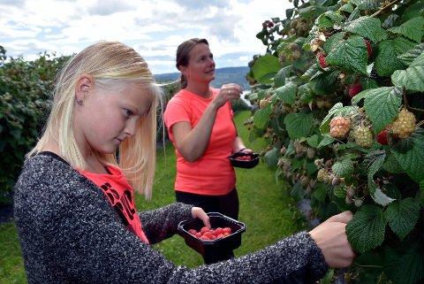 SØTE: Årets bringebær er modne og nå plukker mor Anna og Helene for fullt  sammen med flere andre plukkere på Lunde gård.