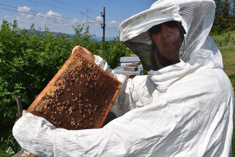 GOD PLASS: Det er færre bier i kubene enn vanlig, slår birøkter Anne H. Bakken fast.
