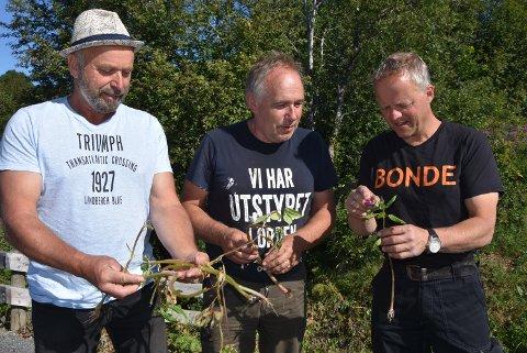 TRUER: Denne planten har spredd seg med eksplosiv kraft, og nå skal den utryddes sier Ola Fyksen, Halvor Holen  og Kristian Fougner som sammen med andre bønder skal ha flere dugnader.