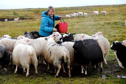 TOSSEN KOM HJEM: Saubruker Torild Borgedal er glad for at lammet Tossen har kommet hjem fra fjellet. Tossen er det svarte lammet i forgrunnen.