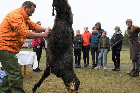 SLAKT: Elever fra Lismarka og Messenlia fikk være med en runde med skikkelig slakting sammen med Jan Morten Kampesveen.