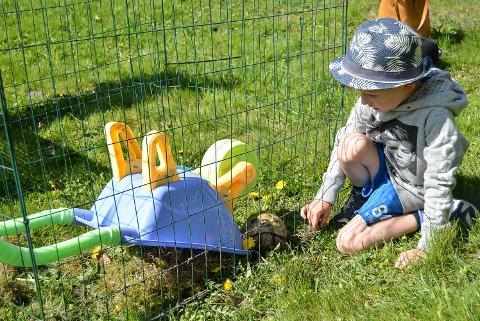 NYTT HJEM: Lucas Leander (4,5) fant en skilpadde på gårdsplassen hjemme i Forstrøms vei. Nå håper han og pappa Raymond Rønning at eieren melder seg. Enn så lenge har de gjort det så bekvemt som mulig for skilpadda i nytt bur.