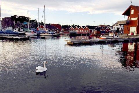 SKJEDDE HER: Der var her ute på idylliske Skjærhalden som motorsykkelen havnet i vannet.Illustrasjonsfoto: Trond Eivind Nilsen.