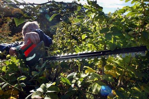 KRANGEL: Tujahekker klippes, trær sages ned, søppel tømmes ulovlig - til naboenes store forargelse. 1. mai-helga er en av de største nabokrangelhelgene i året.