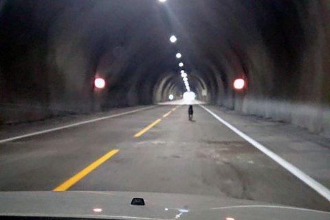 VIL IKKE FORLATE TUNNELEN: Bikkja har oppholdt seg i tunnelen i minst tre timer, og er til fare for seg selv og potensielt andre.