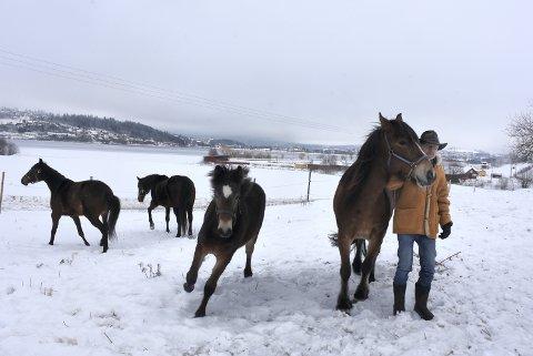 STOrTRIVES: Hestene til Arne Morten Gausen på Eidesøra ved Nossum travbane (bak) stortrives i luftegården. Selv holder han i Nossum Anna som vant fire løp i karrieren. Et år gamle Nossum Arn passerer dem i full fart. I bakgrunnen sees Tabu B.R. og Noss Jetta.