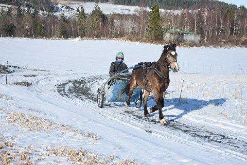 TRENIUNGSTUR: Ola Røstad Haga ute og lufter Solan Borgen i treningsløypa som er lagt rundt gården på Ronglan.