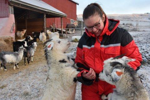 NÆRKONTAKT: Geiter er nysjerrige dyr som søker kontakt med matmor Ina.