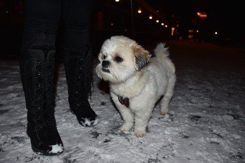 Gode venner: Hunden Pluto har Emilie fått låne flere ganger. Hunden er en blandingsrase.