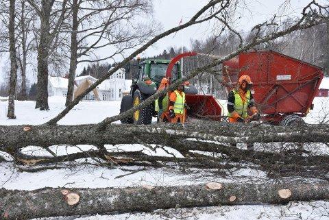 Falt i bakken: Det var i februar i fjor at Eidsverkets bjørkeallé ble fjernet.