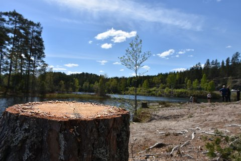 Etter å ha fjernet et tredvetalls trær, blir det mer sol på badeplassen ved Røytjern på Bjørkelangen. Foto: Trym Helbostad
