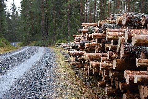 –  Det er veldig bra at så mange har bestilt skogbruksplaner, det legger grunnlaget for høy verdiskapning fra lokalt bærekraftig skogbruk, sier Stian Sandbekkbråten i Aurskog-Høland kommune. Illustrasjonsfoto: Trym Helbostad