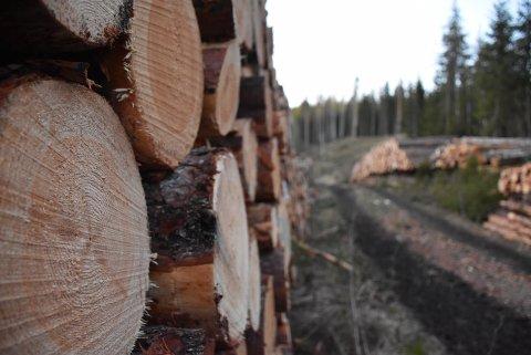 En rekke skogeiere i Aurskog-Høland er tildelt nesten 1,3 millioner kroner i skogmidler fra Statsforvalteren. Illustrasjonsbilde: Trym Helbostad
