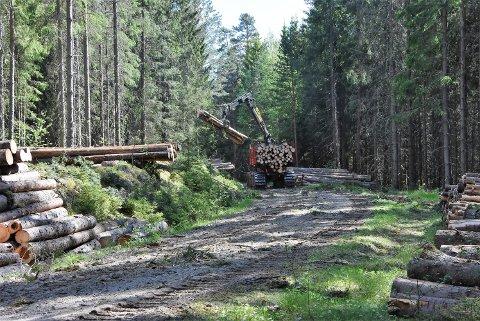 Torsdag startet hogsten i et skogsområde mellom Eksismoa og Eidslia på Bjørkelangen. Foto: Trym Helbostad