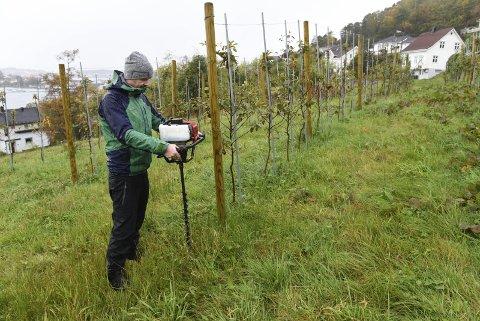 Skal planta fleire: Lars Arve Sæbø viser korleis ein borar hol til nye epletre.